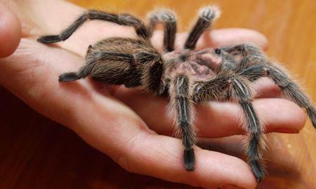 """به چه دلیل از """"عنکبوت""""  میترسیم ؟"""