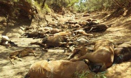 هلاک شدن گله اسبهای وحشی در گرمای بیسابقه استرالیا