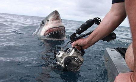 حمله یک کوسه سفید غول پیکر  به یک عکاس در سواحل استرالیا