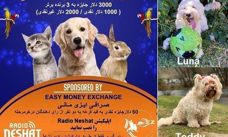 آغاز سری پنجم رای گیری/ Luna و Teddy در مرحله چهارم رای گیری به فینال دومین دوره مسابقه عکس حیوانات خانگی رادیو نشاط راه پیدا کردند.