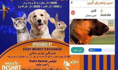 آغاز سری ششم رای گیری/ کایزر در مرحله پنجم رای گیری به فینال دومین دوره مسابقه عکس حیوانات خانگی رادیو نشاط راه پیدا کرد.