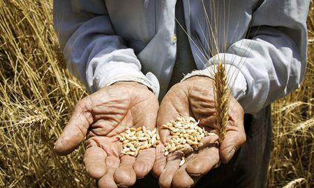 افزایش ۳۰ درصدی قیمت غلات طی سال ۲۰۲۰