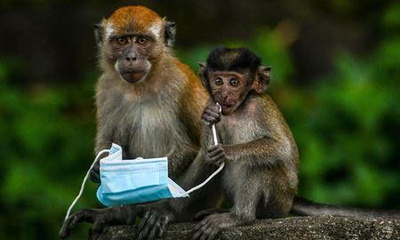 میمونبی، ویروس جدید در چین جان یک شهروند را گرفت