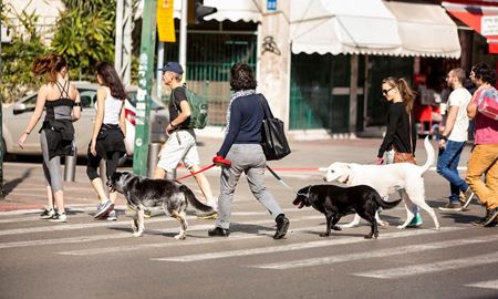 نگه داری یک سگ در استرالیا چقدر هزینه دارد؟